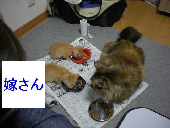 ぬこ10.jpg
