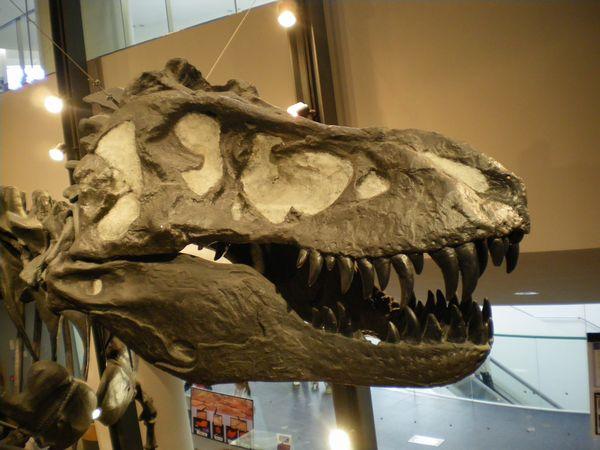 恐竜17.jpg